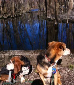 Dogs listening to frogs in a bog